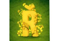 Žlutá je dobrá – Fámy a fakta o řepce