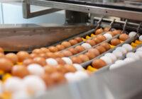 Hnědá a bílá vejce pohromadě neznamenají míchaní klecových a podestýlkových